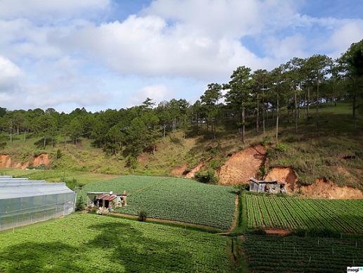 Trình tự cho thuê đất nông nghiệp tại Hà Tĩnh