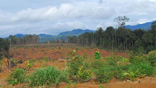 Đăng ký chuyển đổi mục đích sử dụng đất lâm nghiệp sang đất ở tại Hà Tĩnh