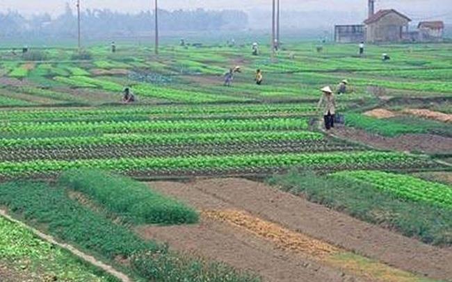 Thủ tục chuyển đổi quyền sử dụng đất nông nghiệp của hộ gia đình, cá nhân tại huyện Nghi Lộc